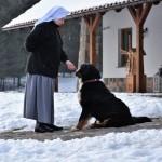 bernese-mountain-dog8