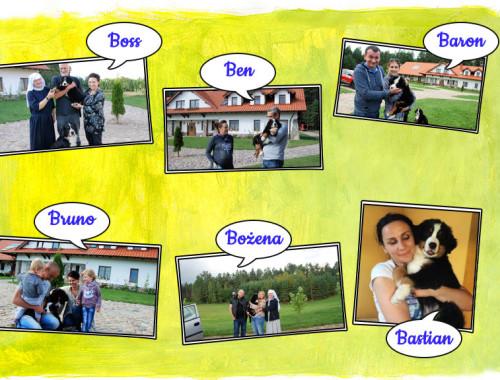 Miot B – Małe berneńczyki w swoich domach – 28 września 2016