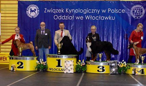 Krajowa Wystawa psów rasowych Choceń 18/03/2017